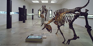 Museum für Vorgeschichte Halle